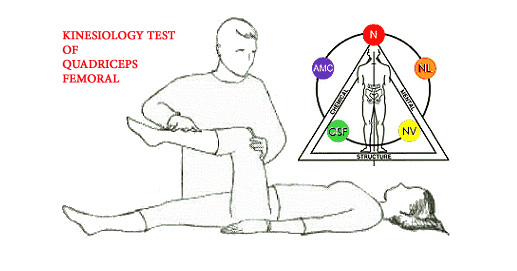 Example of kinesiological tests
